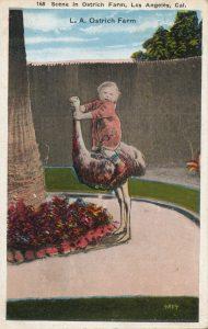 ダチョウと子ども(Ostrich and child)
