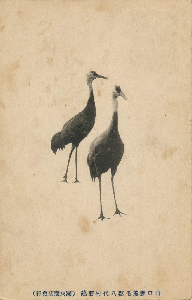 2羽の鶴(2 cranes)