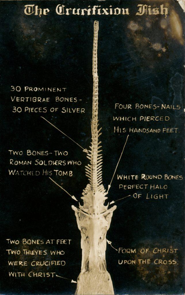 謎の骨(Mysterious bone)