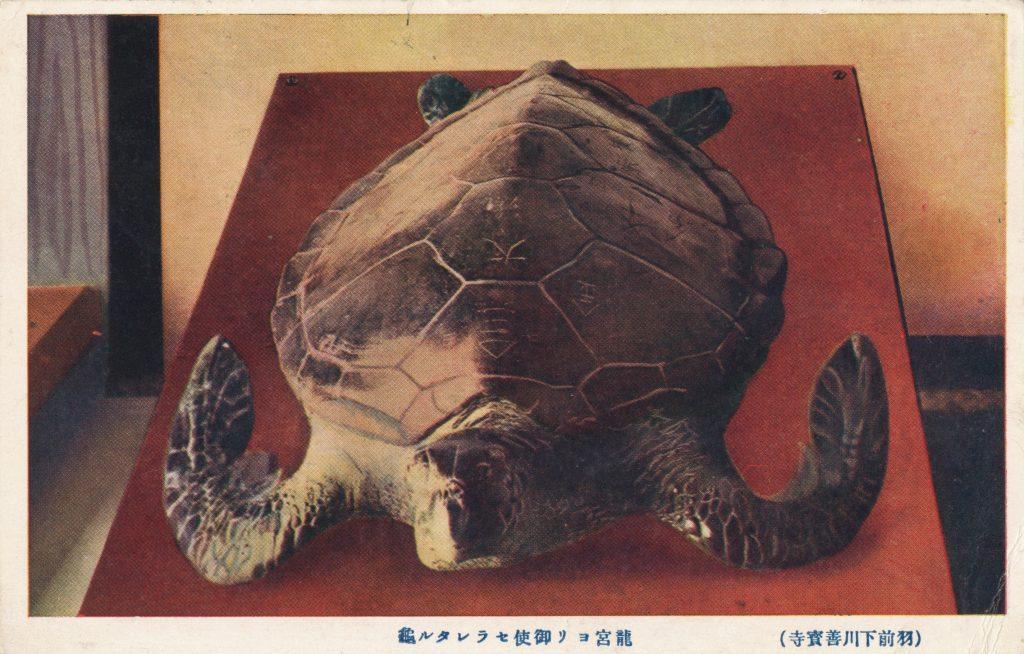 大きな亀(Big turtle)