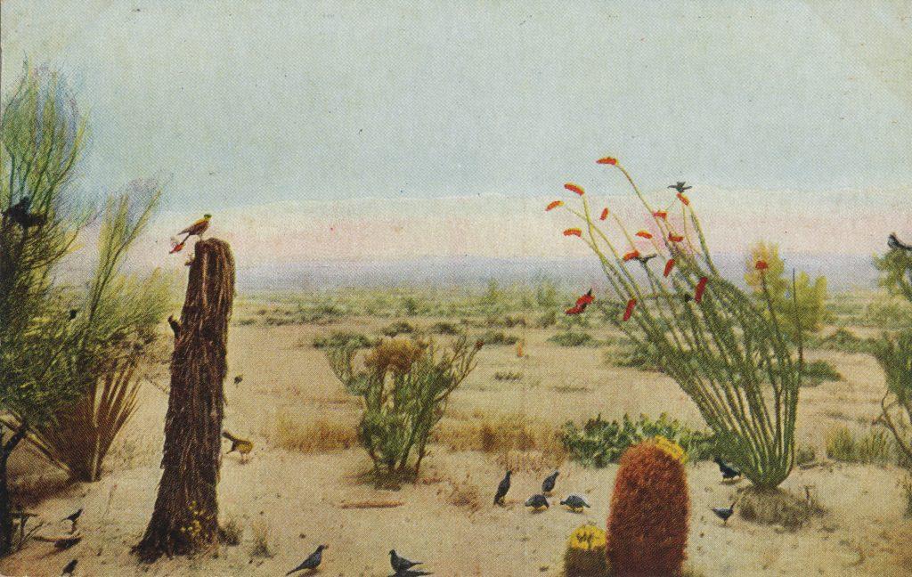 砂漠の鳥たち(Birds in a desert)