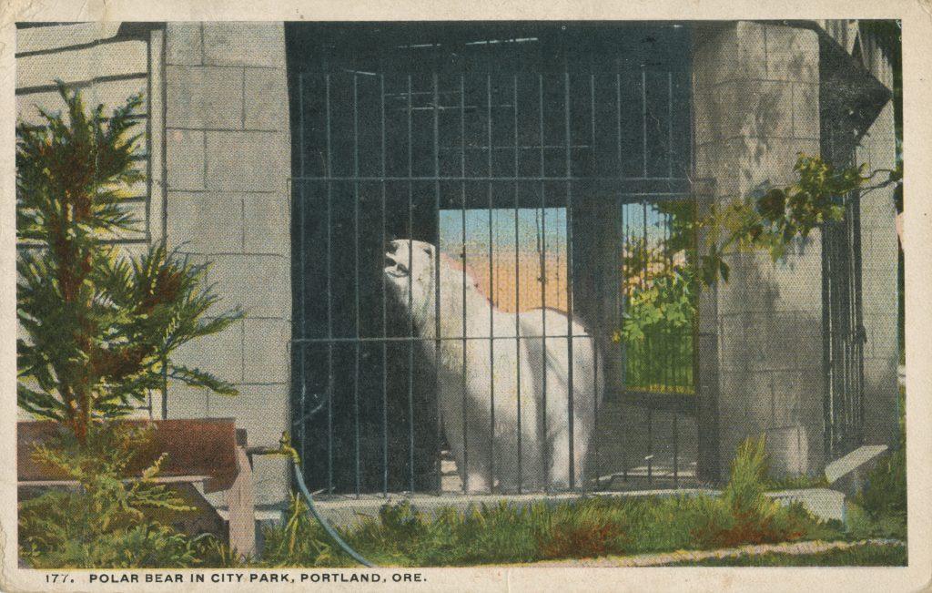 オリの中の白熊(Polar bear in the cage)