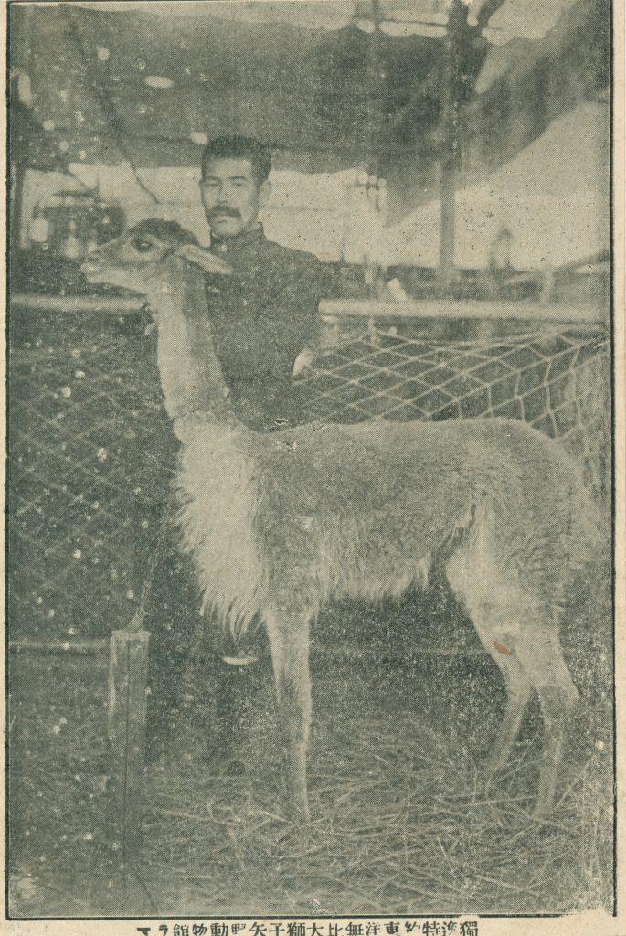 男性とラマ(Man and Lama)