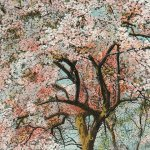 Cherry blossom viewing(お花見) – Free image Vintage postcard
